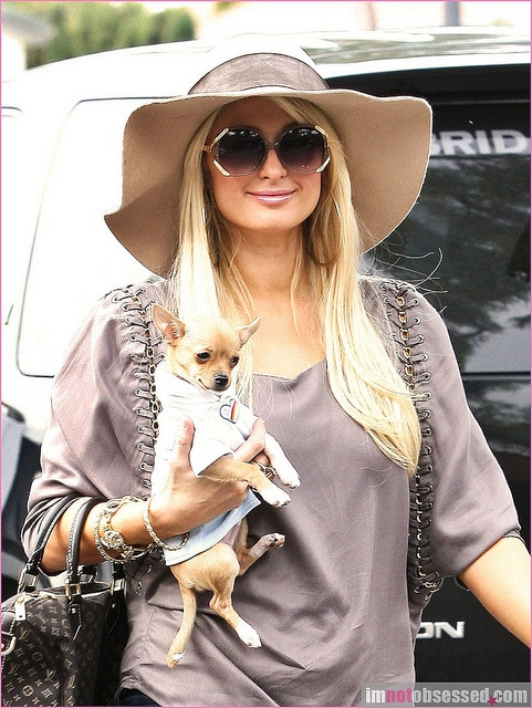Paris Hilton's Dog.